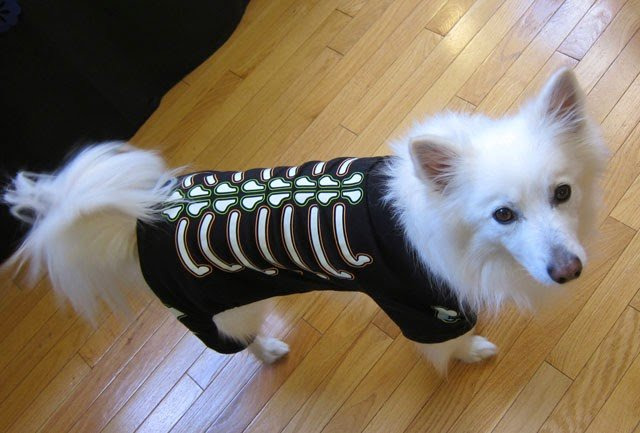 Dog costumes - skelleton