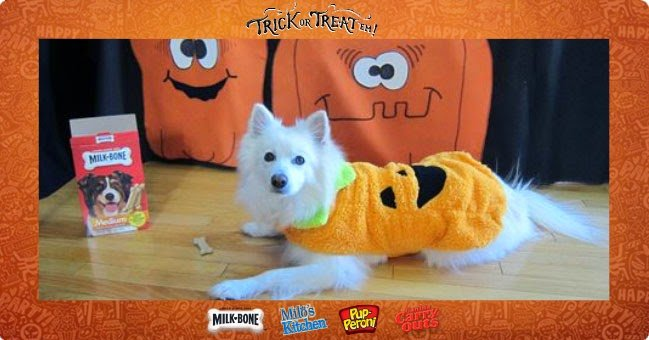 Truffle looks adorable in her pet costume #TrickorTreatEm
