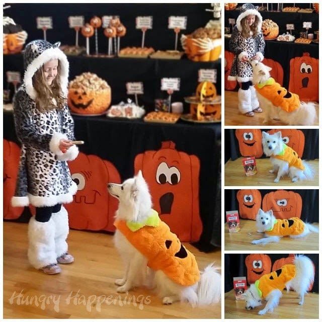 Halloween Treats for People and Pets at our Pumpkin Party | HungryHappenings.com