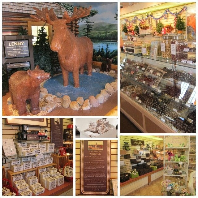 Life size chocolate moose Len Libby Chocolatier