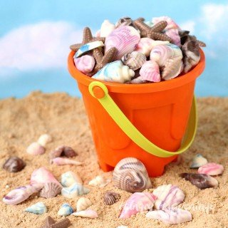 Chocolate Sea Shells