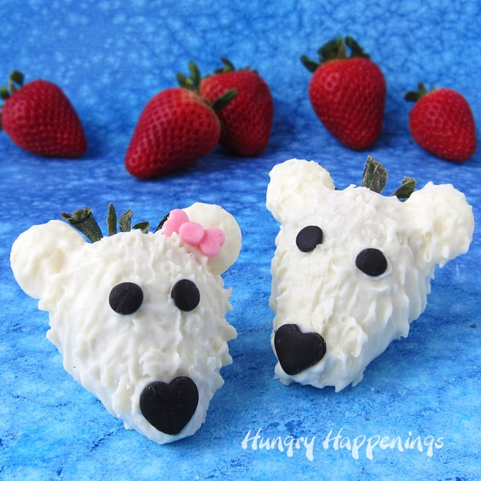 white chocolate covered strawberry polar bears with black modeling chocolate eyes and nose look so cute on a blue watercolor background set in front of fresh strawberries